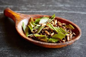 edible cricket recipes